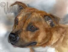 Staffordshire Bull Terrier SBT Dog Art Print of Watercolor Painting Judith Stein