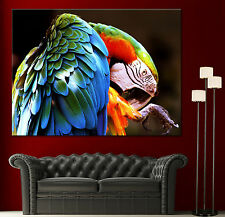 Colorful Parrot Canvas Giclee Print Wall Art Prints Home Decor 1 2