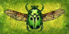 The Scarab Beetle by David Lozeau Canvas Giclee Art Bug Insect