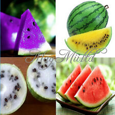 10 PCS 2 Kinds Rare Sweet Watermelon Seeds Fruit Seed Hot Sales W