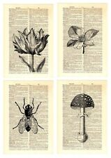 Upcycled Vintage Dictionary Book Page Wall Art Prints - Floral & Nature