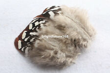 Wholesale 50/100 PCS beautiful natural pheasant feathers 2-4 inches new