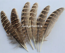 Beautiful 20-200 PCS natural pheasant feather 4-6 inch / 10-15 cm free shipping