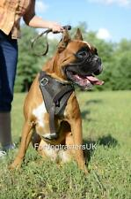 Boxer Dog Harness with Handle Option | Dog Walking Harness, BRAND NEW