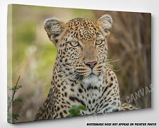 X LARGE CANVAS Stunning Starring Leopard Face Animal Photo Picture Wall Art A1
