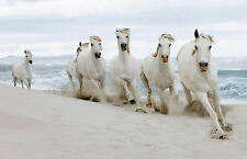 A3 Poster - White Horses Running on the Beach (Animal Picture Poster Ocean Art)