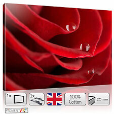 LARGE RED ROSE PETALS FLOWERS MODERN LOVE CANVAS WALL ART FRAMED PRINTS PICTURES