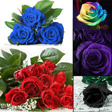 100Pc Beautiful Flower Plant  Seeds Holland Rose Seeds Lover Gift Garden Home