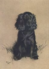 Cecil Aldin A Dozen Dogs or So Number 3 of 13 Vintage Print on Gloss Photo Paper
