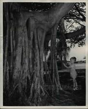 1948 Press Photo This gnarled, heavily rooted tree, of the famous banyan variety