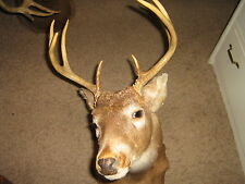 WHITETAIL TAXIDERMY DEER HEAD