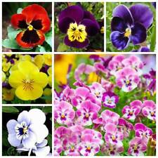Bulk Seed 50 Pcs Pansy Seeds Perennial Home Garden Plants Flowers Seed S078