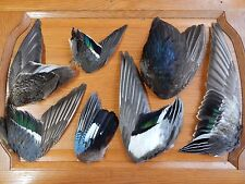 7 Odd Dried  Wings Bird Wings Fly Tying Arts Crafts Taxidermy