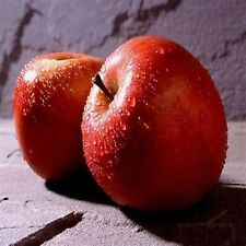 MacIntosh Apple Fragrance Oil Candle/Soap Making Supplies **Free Shipping**