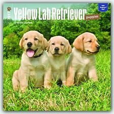 NEW Labrador Retriever Puppies, Yellow 2017 Square by BrownTrout