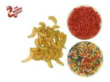 500 Live Spikes Maggots. Ice Fishing Bait. Red, White, & Mixed Colors Grub Worms