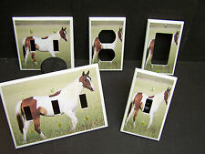 PINTO HORSE BROWN AND WHITE #1 LIGHT SWITCH OR OUTLET COVER MULTIPLE SIZES
