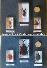 Arthropods in resin real insects scorpion beetles spider with card and gift box