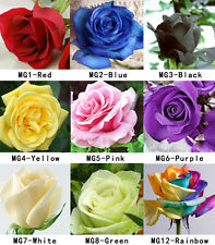 100 Seeds Fresh Hot Colorful China Rare Rose Beautiful Flower Seed To Your Lover