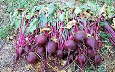 "Beets, HEIRLOOM ""Ruby Queen"" BEET SEEDS, All American Winner.Organic untreated !"
