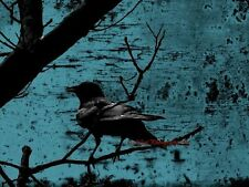 Raven Teal Black Industrial Crow Wall Art Bird On Branch Matted Picture USA A672
