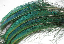 Wholesale Genuine Natural Peacock Sword Feathers USA SELLER -  FREE SHIPPING