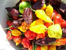 Hot Pepper Seeds - All Sort Mix - Many Hot,Very hot, And Super HOT Peppers !