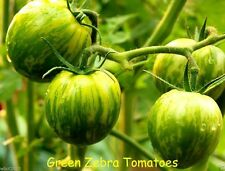GREEN ZEBRA TOMATO - HEIRLOOM SEEDS - Beautiful,Delicious,Tangy Salad Tomato !