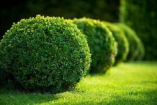 COMPOST FOR GROWING CONIFERS, BUXUS & LAURUS NOBILIS IN CONTAINERS & POTS