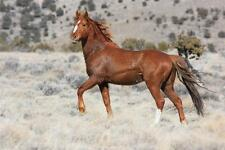 BEAUTIFUL MUSTANG HORSE GLOSSY POSTER PICTURE PHOTO PRINT wild stallion 2080