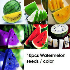 10pcs Rare Watermelon Seeds Delicious Fruit Vegetables Seed Colorful Wholesale