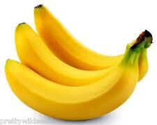 GROW YOUR OWN BANANA PLANT KIT ALL YOU NEED TO GROW YOUR OWN BANANA FROST HARDY