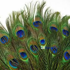 Real Natural Peacock Tail Eye Feathers 9-12 Inches 50pcs 100pcs 150pcs 200pcs DA