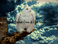 Snowy Owl Tree Aqua Blue White Country Home Decor Art Print Matted Picture A147