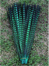 10-100 Pcs 25 -30 cm / 10-12 inch natural pheasant tail feathers Green