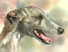 COOL WHIPPET Greyhound Dog Art Print of Watercolor Painting Judith Stein Signed