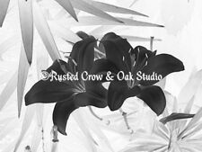 Study of Black and White Lily Photo Picture Wall Art Choose Color & Size A116