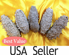 Wild Dried Sea Cucumber 南美刺参 From South America Free Shipping within US!!