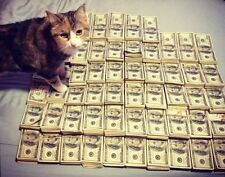 CAT & CASH GLOSSY POSTER PICTURE PHOTO money currency funny cool kitten cute 671
