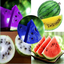 10PCS Rare Watermelon Seeds Delicious Fruit Seeds Orange Purple 7 Colors