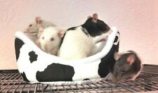 Cuddle Cup bed for small pets guinea pigs rats hedgehogs BUILD YOUR OWN!
