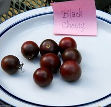 BLACK CHERRY TOMATO SEEDS - first truly black cherry tomato - Open-pollinated.