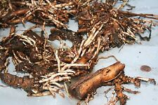 hop rhizomes (6 varieties):  commercial farm - Hip Hops Inc.