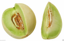 Honeydew Melon Seed - Can grow honeydews in containers on balconies or porches