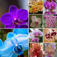 20PCS Garden Phalaenopsis Flower Seeds Bonsai Plant Butterfly Orchid Home Plant