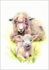 HELEN ROSE Limited Print of SHEEP and a LAMB animal art watercolour painting 275