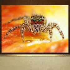 Scary Spider poster print wall art  wall decor