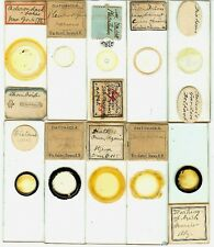 Various spp. Diatoms from Various Locations Microscope Slides