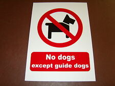 Warning No Dogs Rigid A4 Sign - guard dogs, guides only, keep on lead - shops