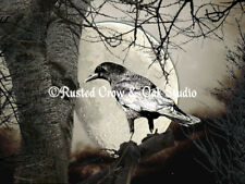 Rustic Black Bird Raven Crow Tree Moon Brown Art Home Decor Matted Picture A142